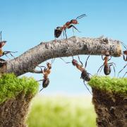 Image of ants constructing together